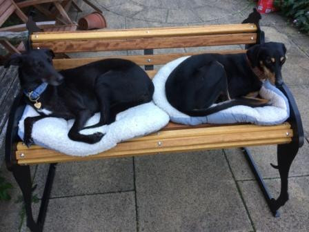 Candy &  Echo relaxing on their bench