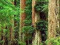 120762956538_tree_00079.jpg