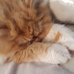 Outstretched arms - sleeping kitten
