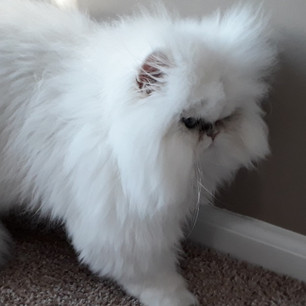 White Kitten_edited.jpg
