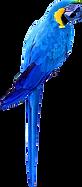 png-perroquet.png