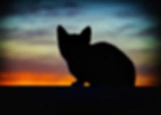 animal-art-backlight-219958_edited.jpg