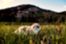 agriculture-animal-beautiful-460985.jpg