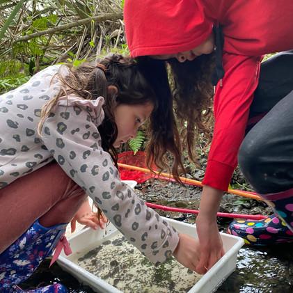Hinonga Īnanga | Te Kura Kaupapa Māori o Te Rito