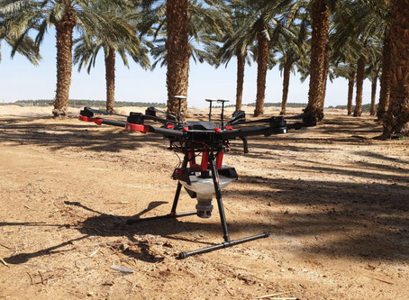 Blue White Robotics/Dropcopter help Israeli date growers pollinate amid labor shortage