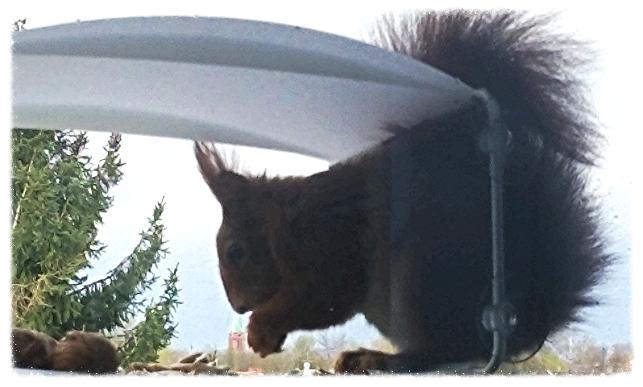 Ein Eichhörnchen zum Muttertag