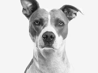 Calming Sessions:  Helping Our Dogs Be Centered, Present, and Peaceful