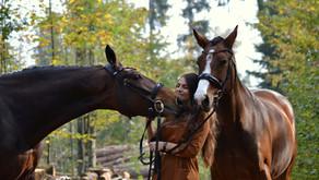 Pferde gehen zum Zahnarzt?