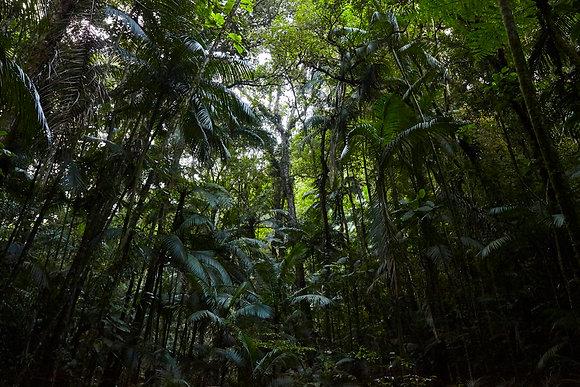 Plantação de Palmito - Parque Estadual Carlos Botelho. Tiago Lima Marcelino,2016
