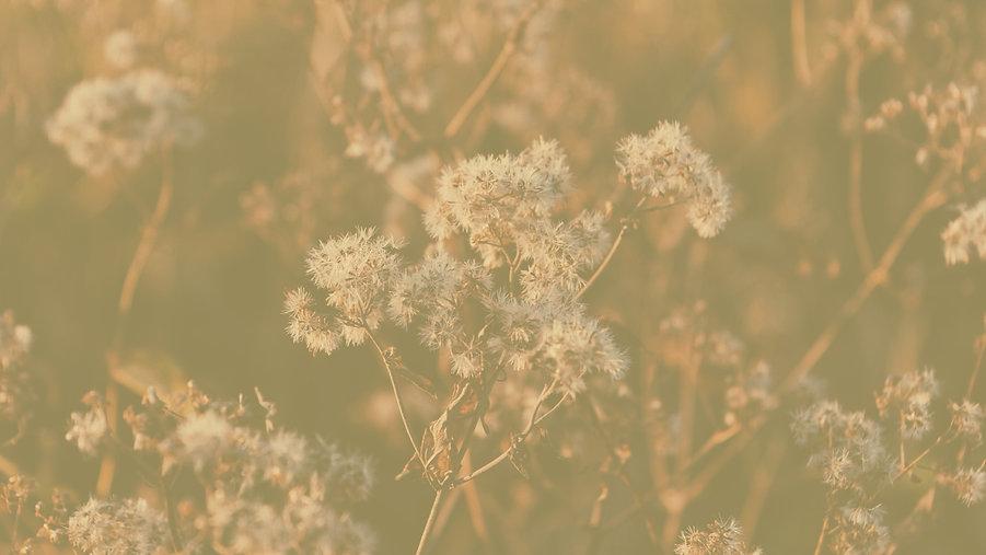 selective%20focus%20photograph%20of%20flowers_edited.jpg