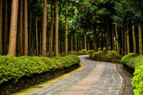 Jeolmul Natural Recreation Forest