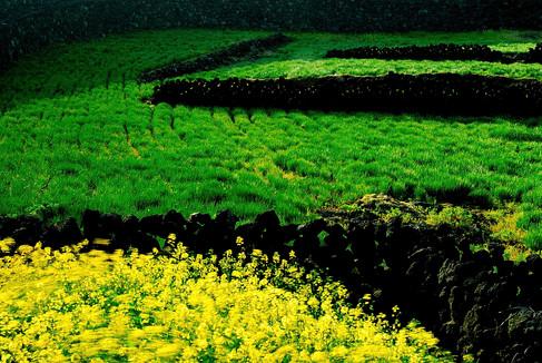 Spring in Jeju