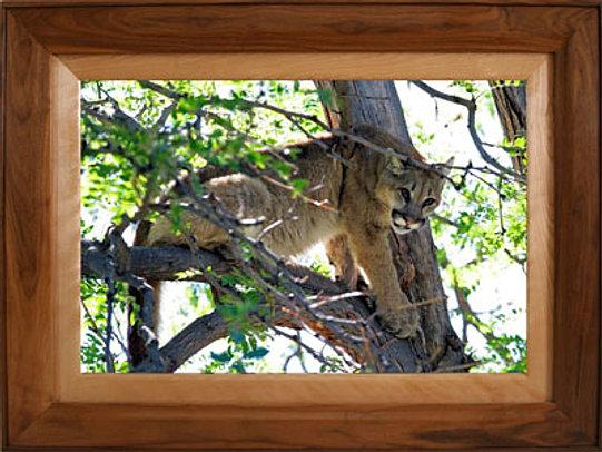 walnut maple frame