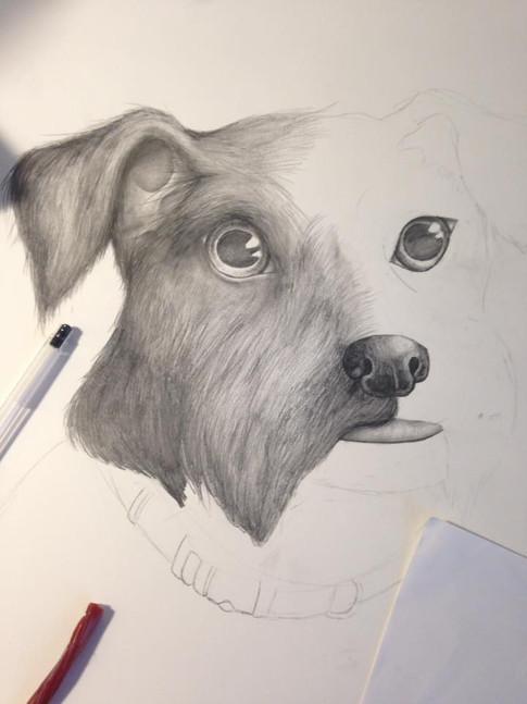 Dog Progress