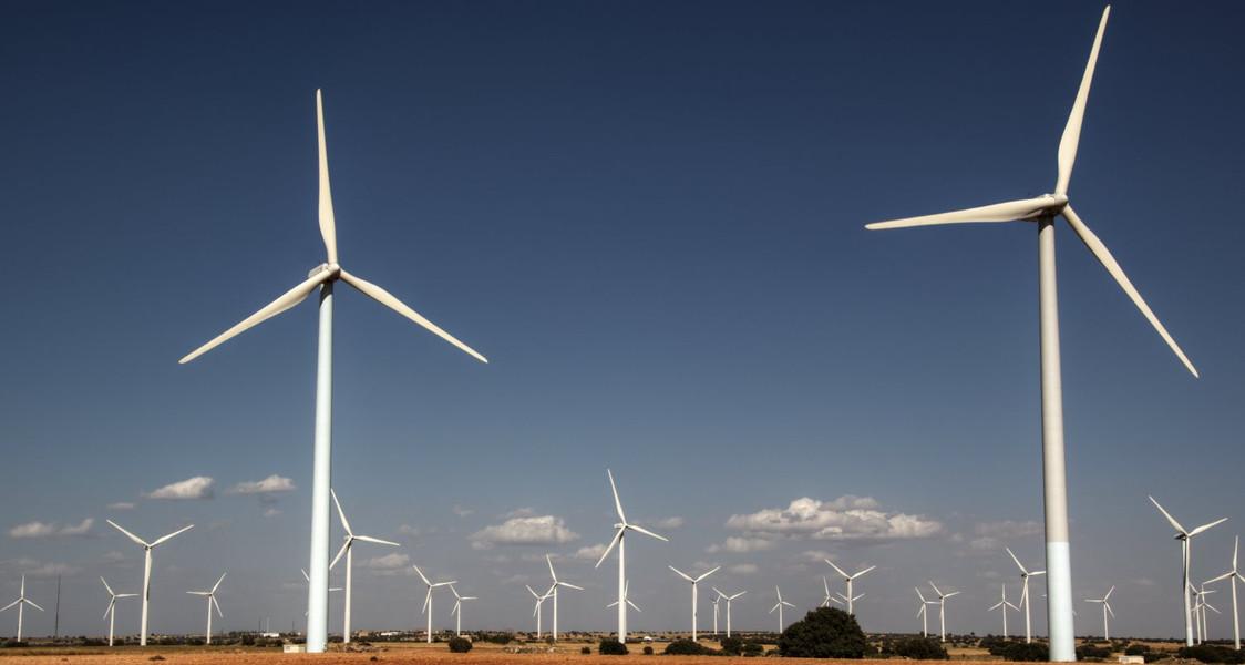 Windfarm Mortality Surveys