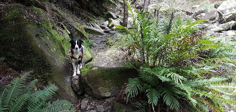 Conservation Dogs Australia