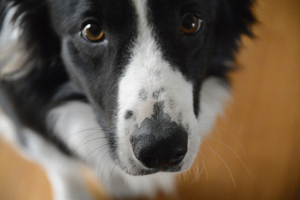 How can our detection dogs help you?