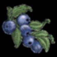blueberrys-full.png