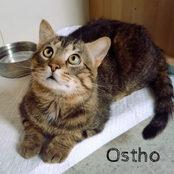 Ostho
