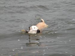 duck season 2013-2014 018.jpg