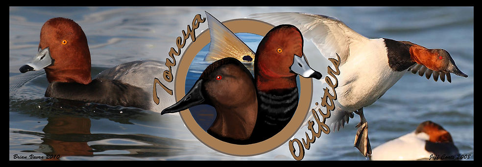 North Florida Guided Layout Hunts for Canvasback and Redheads