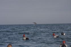 2012 duck hunt 230.JPG