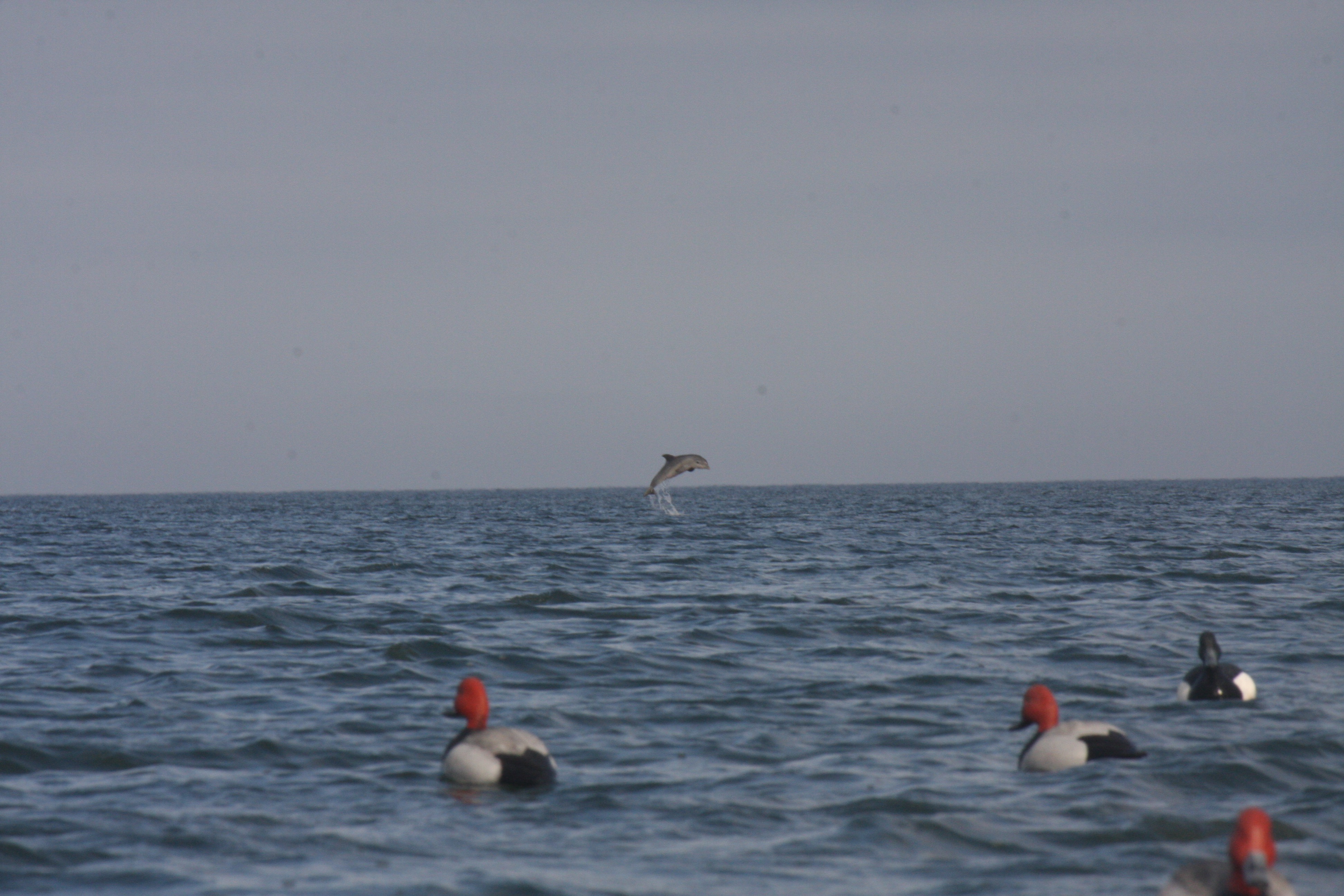 2012 duck hunt 229.JPG