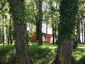 Camping du Lac de Parisot - Chalet.jpg