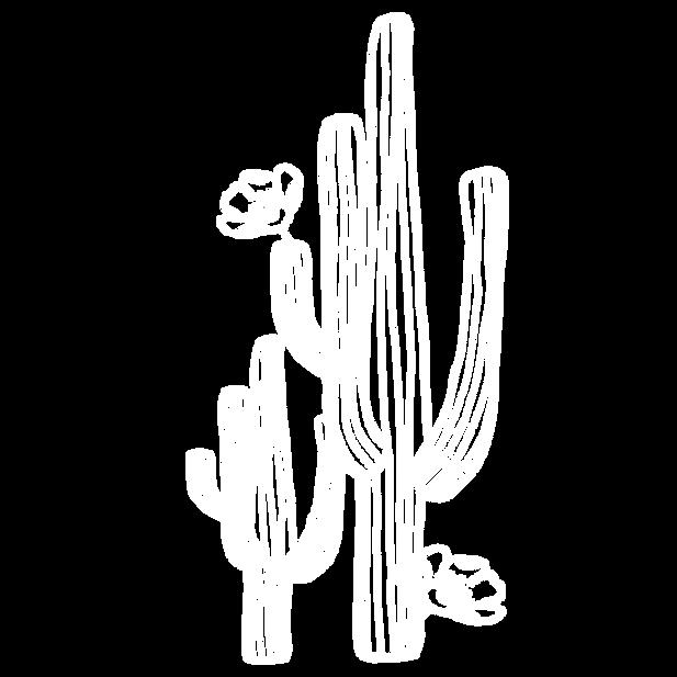 Ashleigh Sky Cactus White.PNG