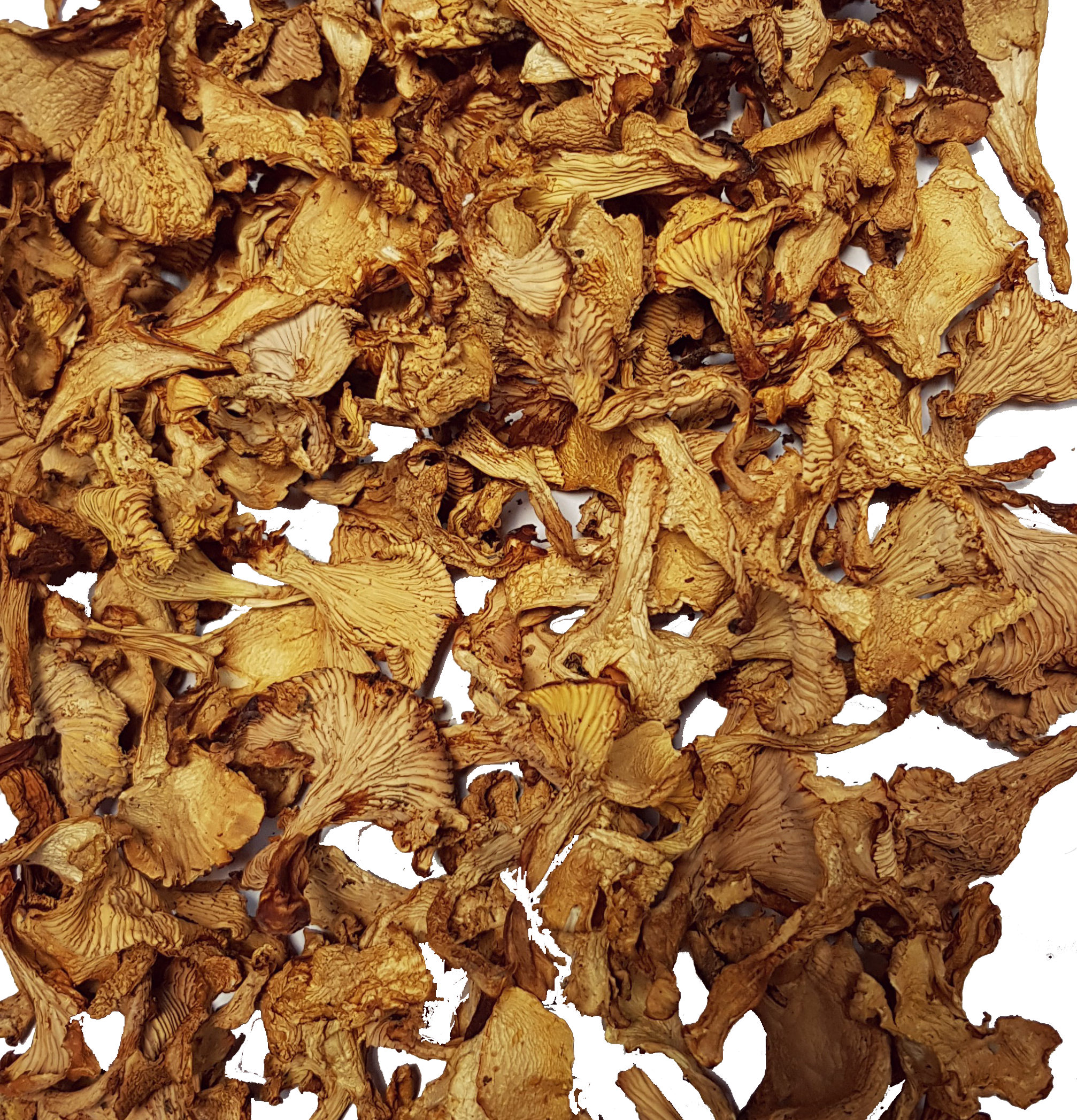 Dried chanterelles Adexlt
