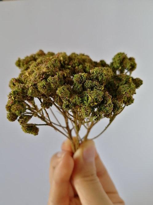 Árbol verde armarillento