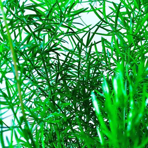 Grünpflege 2.jpg