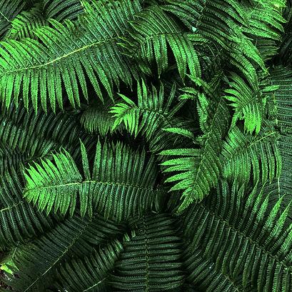 Grünpflege 3.jpg