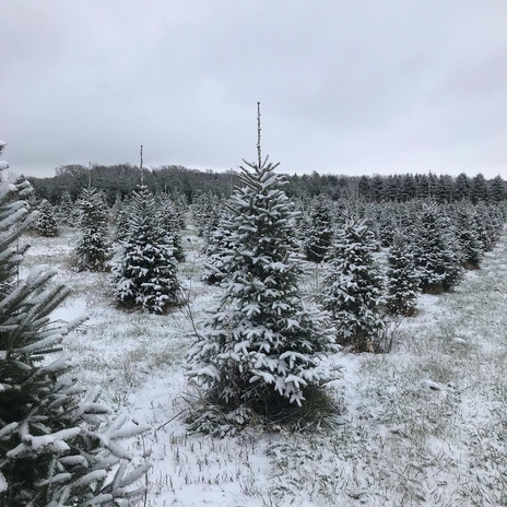 We have 75 acres of trees!