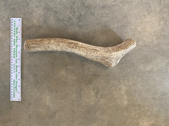 Long Whole Elk Antler