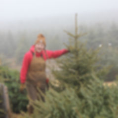 Ruth showing a fresh cut, pre-cut Christmas tree, already cut trees ready to take home