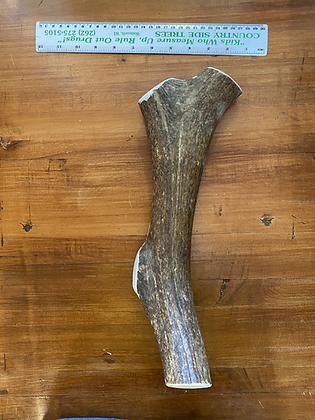 Long Whole Elk Antler