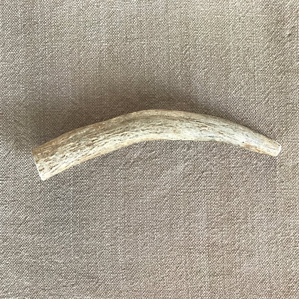Moose Antler (Whole) **This is the item that ships