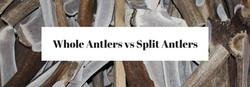 Whole Antlers vs Split Antlers-2