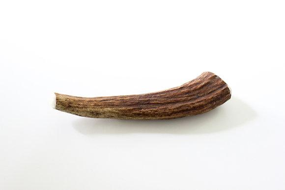 Large Moose Antler (Whole)
