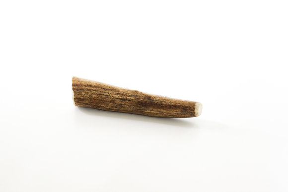 Small Moose Antler (Whole)