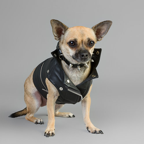 THE ORIGINAL MOTO DOG VEST