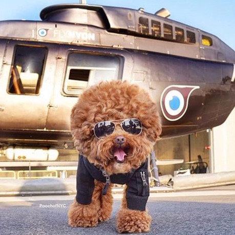 BLACK MA-1 PILOT DOG JACKET