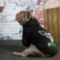 Muttfits Dog Hoodie. French bulldog wearing our doggy version of the Misfits dog hoodie.
