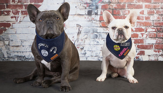 French bulldogs wearing denim dog bandanas with patches.