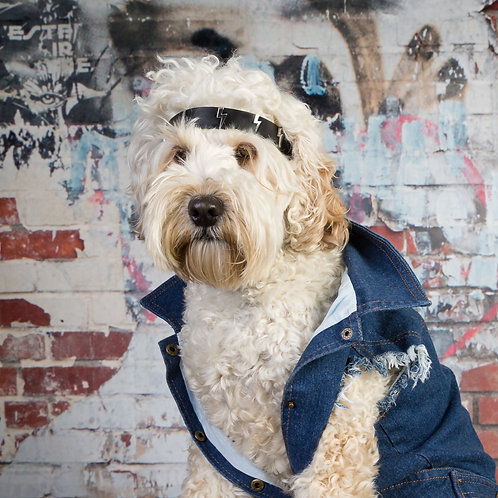dog denim, dog jackets, dog coats, dog clothing, dog clothes, rock dog, rock, dogs, denim