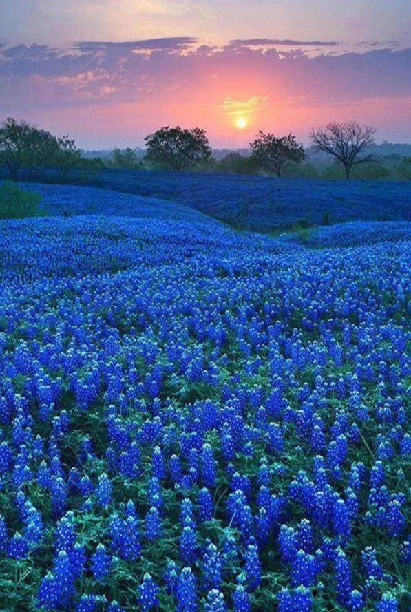 blue%20flowers_edited.jpg