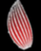KiHara_4ColorHighRes_edited_edited_edite
