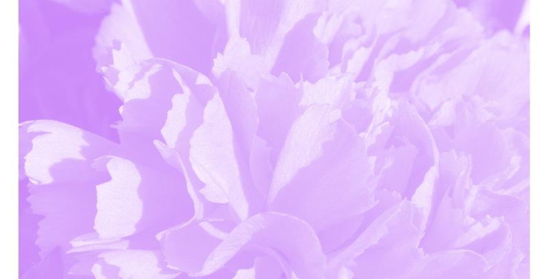 Soft Florals 2 - Light Violet (Print)