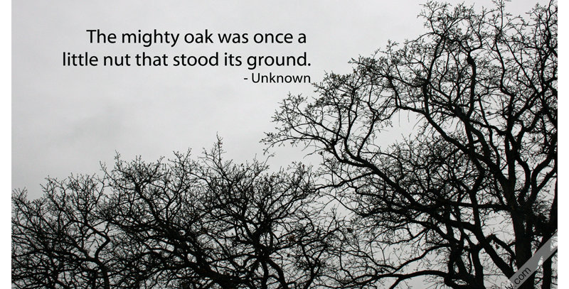 The Mighty Oak (Canvas)